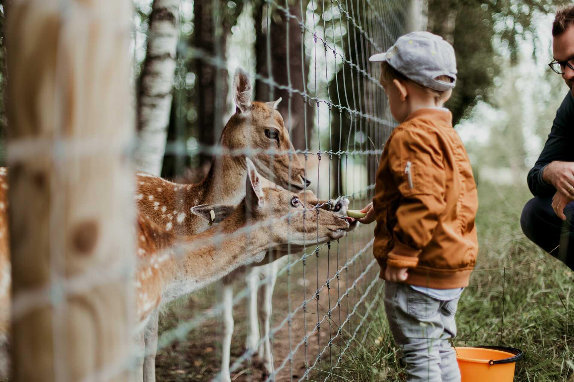 Dítě v zoo