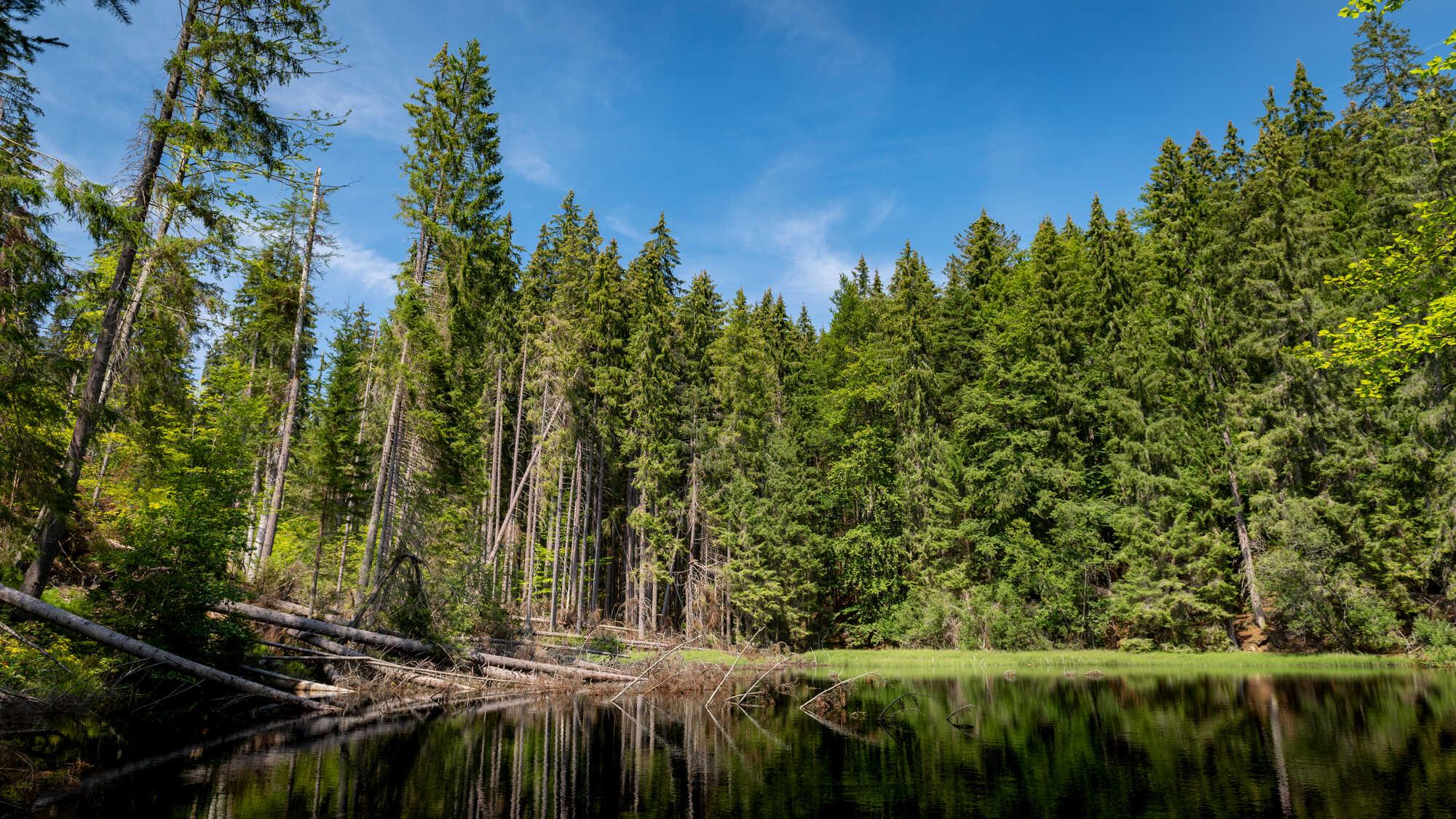Pohled na Boubínský prales